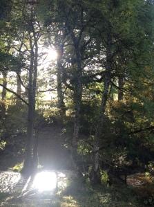 Fron Cottage stream